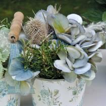 Trockenblumen Distel Weiß gewaschen 60cm 100g