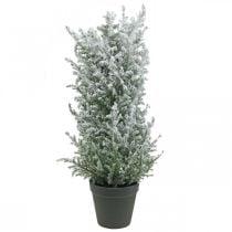 Künstlicher Wacholder im Topf beschneit Kunstpflanze H47cm