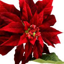 Weihnachtsstern Rot 70cm
