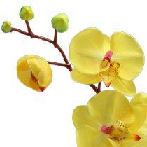 orchideen preiswert online kaufen. Black Bedroom Furniture Sets. Home Design Ideas