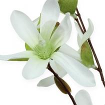 Magnolienzweig Hellgrün 91cm