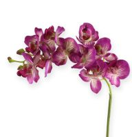 Orchidee Phalaenopsis Lila-Creme 62cm