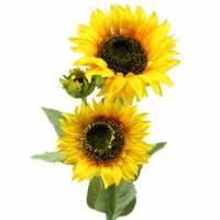 Sonnenblume Seidenblume 66cm