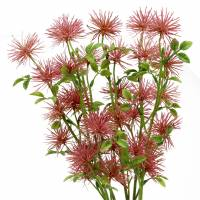 Xanthium Seidenblume Altrosa 53cm 6St
