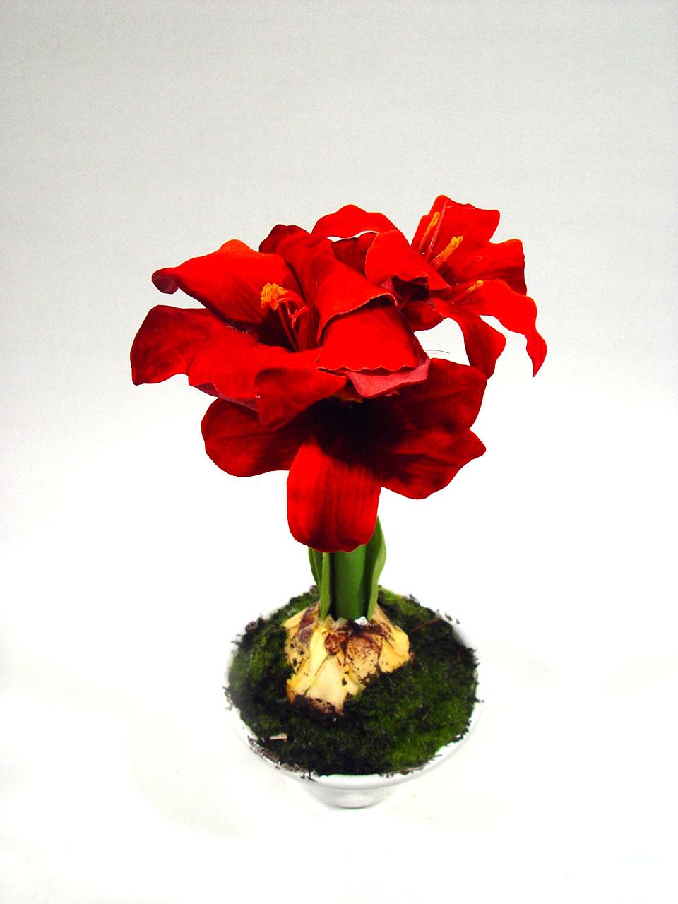 amaryllis im topf 28 cm rot preiswert online kaufen. Black Bedroom Furniture Sets. Home Design Ideas