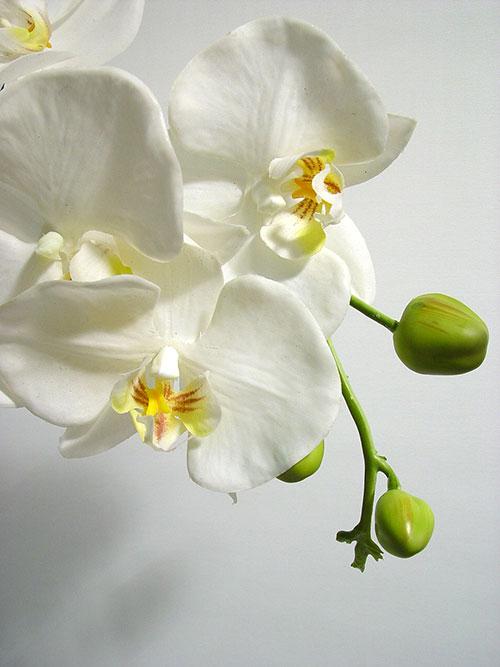 orchidee wei 82cm mit bl tter und luftwurzeln preiswert online kaufen. Black Bedroom Furniture Sets. Home Design Ideas
