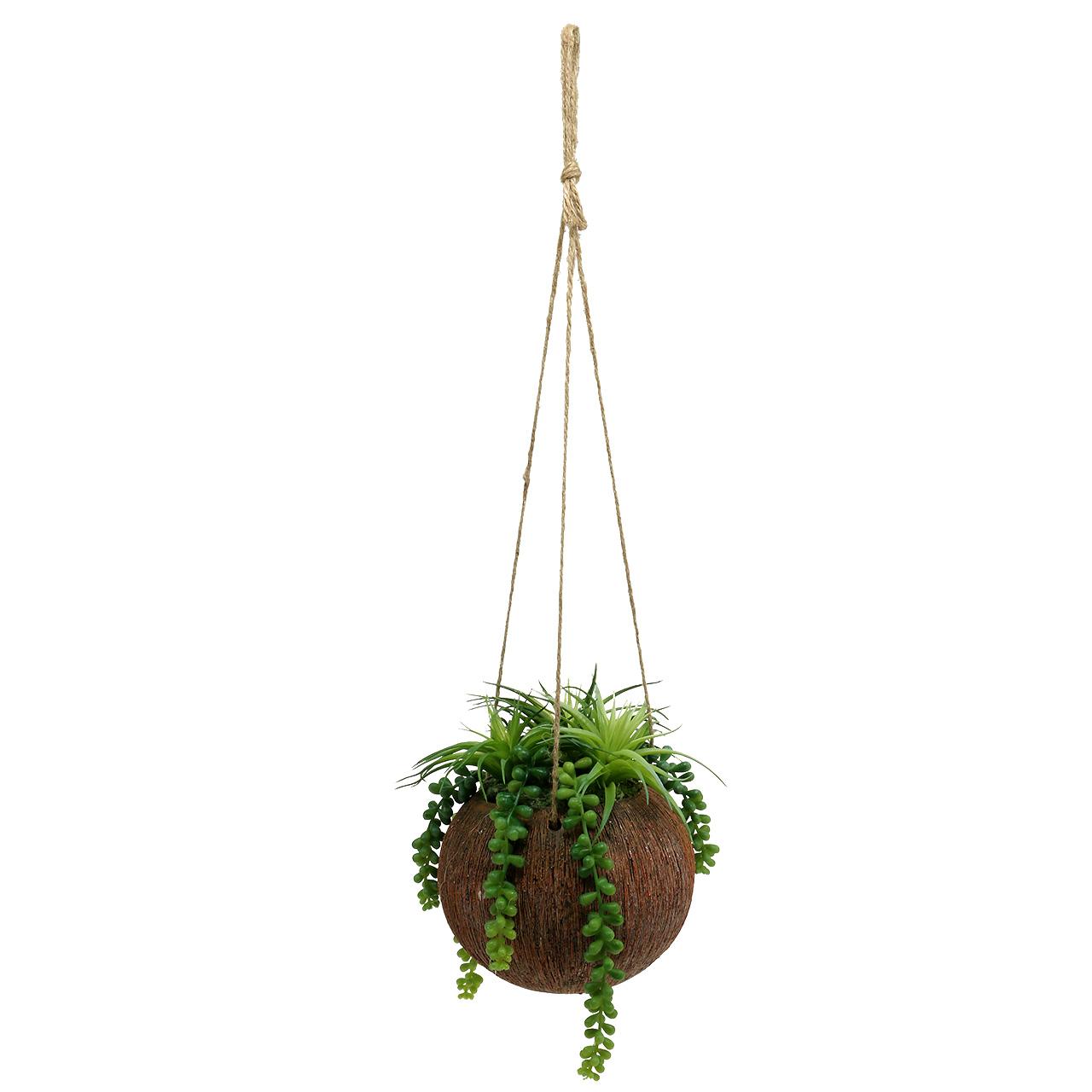h ngepflanzen sukkulenten im topf l60cm 16cm preiswert online kaufen. Black Bedroom Furniture Sets. Home Design Ideas