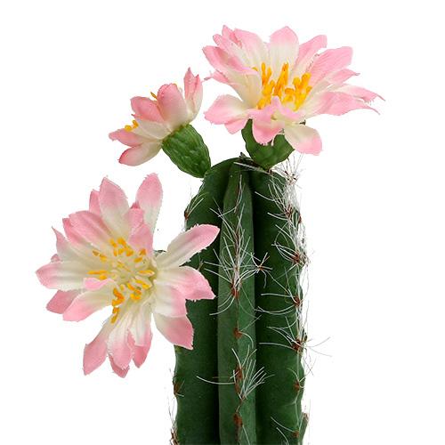 kaktus im topf mit bl te rosa h 21cm preiswert online kaufen. Black Bedroom Furniture Sets. Home Design Ideas