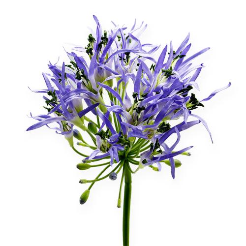 kunstblumen agapanthus lila 81cm preiswert online kaufen. Black Bedroom Furniture Sets. Home Design Ideas