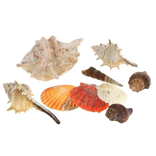 Muscheln Seestern Muschelmix Streudeko Bad Ozean Meer Korb maritime Deko