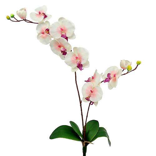 orchidee mit 2 zweigen 60cm wei rosa preiswert online kaufen. Black Bedroom Furniture Sets. Home Design Ideas