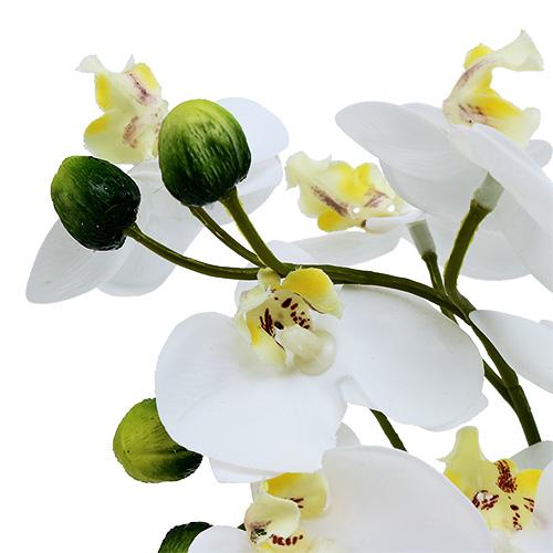 orchideen im topf 30cm wei preiswert online kaufen. Black Bedroom Furniture Sets. Home Design Ideas