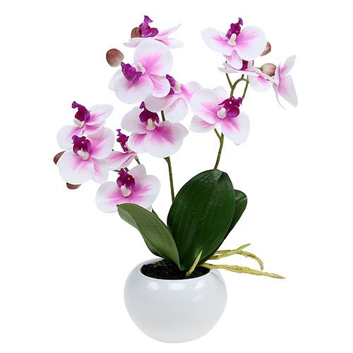pflege orchideen im topf orchideen im topf h30cm wei rosa preiswert online kaufenn midi. Black Bedroom Furniture Sets. Home Design Ideas