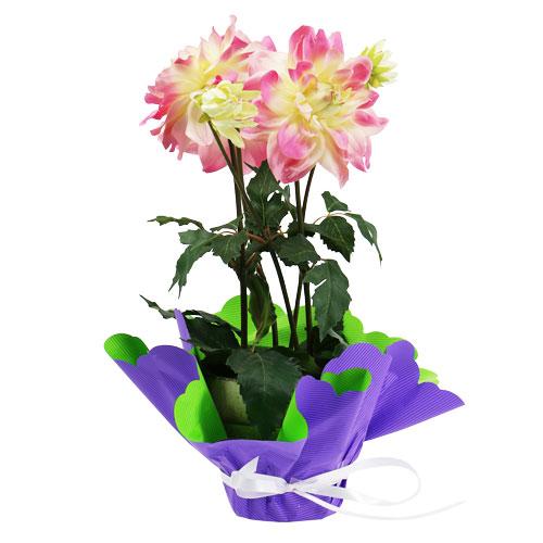 rondella 48cm zweifarbig lila gr n 50st preiswert online kaufen. Black Bedroom Furniture Sets. Home Design Ideas