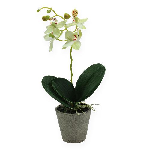 orchidee im topf hellgr n 26cm preiswert online kaufen. Black Bedroom Furniture Sets. Home Design Ideas