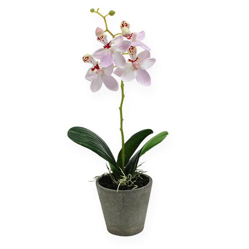 mini orchidee im topf rosa 26cm preiswert online kaufen. Black Bedroom Furniture Sets. Home Design Ideas