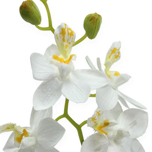 orchidee im topf wei 26cm preiswert online kaufen. Black Bedroom Furniture Sets. Home Design Ideas