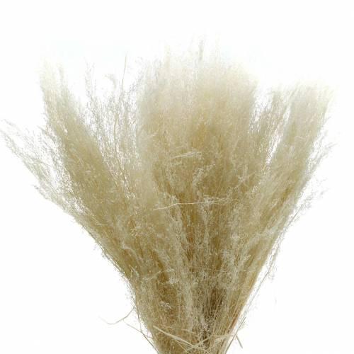 Trockengras Agrostis gebleicht 80g