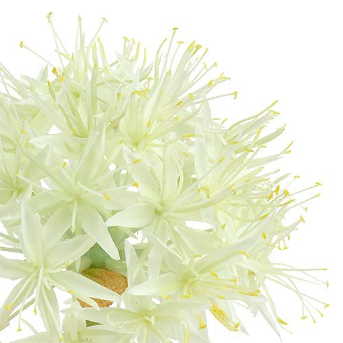 Allium Cremeweiß L76cm