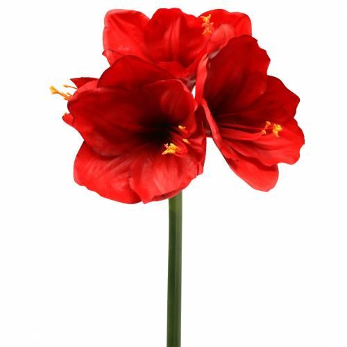 Amaryllis Rot 75cm