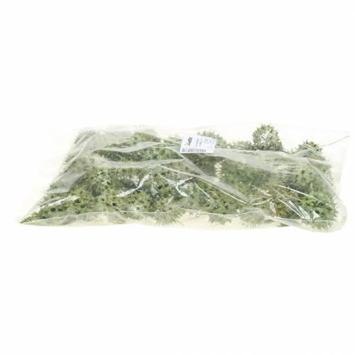 Amberbaum Zapfen Grün gefrostet 250g
