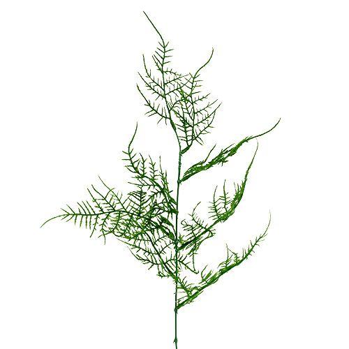 Asparaguszweig  50cm Grün 5St