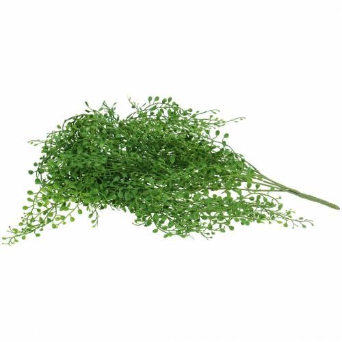 Mühlenbeckia Hänger Grün 95cm