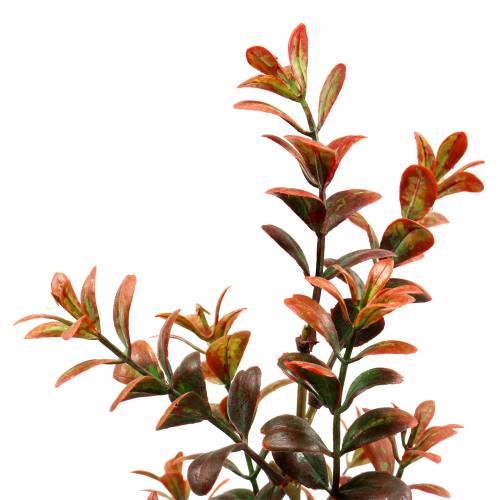 Buchsbaum Dekozweig herbstlich 50cm