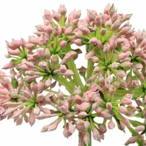 Allium künstlich Rosa 55cm
