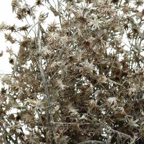 Trockenfloristik Wildblumenzweig Weiß gewaschen 60cm 100g