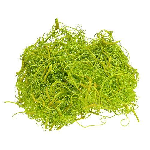 Curly Moos Hellgrün 350g