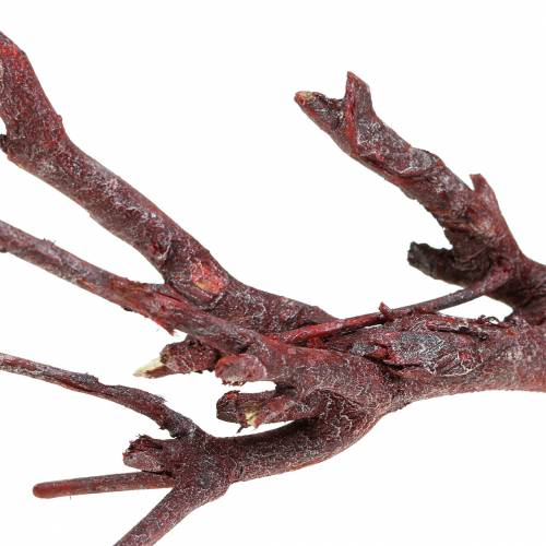 Dekoast Currybusch Rot gewaschen 500g