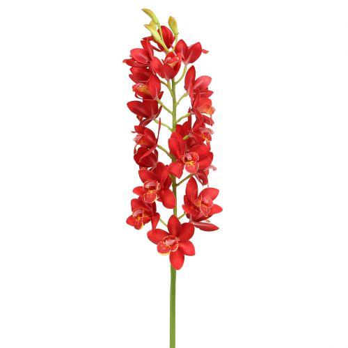 Orchidee Cymbidium Rot 78cm