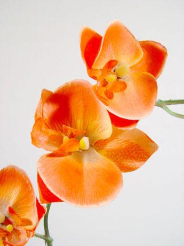 orchidee x2 60cm orange preiswert online kaufen. Black Bedroom Furniture Sets. Home Design Ideas
