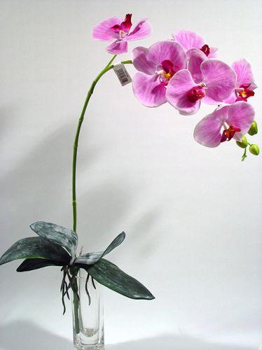 orchidee lila 82cm mit bl tter und luftwurzeln preiswert online kaufen. Black Bedroom Furniture Sets. Home Design Ideas