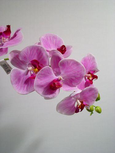 orchidee lila 82cm mit bl tter und luftwurzeln preiswert. Black Bedroom Furniture Sets. Home Design Ideas
