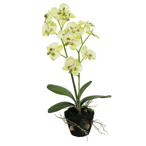 mini orchidee gr n mit erdball 30cm preiswert online kaufen. Black Bedroom Furniture Sets. Home Design Ideas