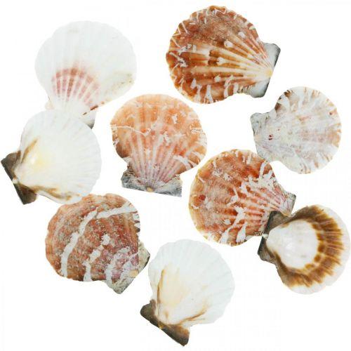 Dekomuschel Weiß, Rot Echte Muscheln im Bastnetz Tischdeko 400g