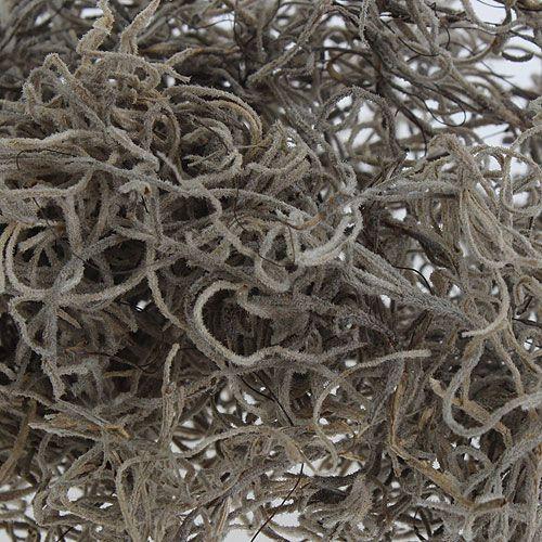 dschungelmoos natur 250g preiswert online kaufen