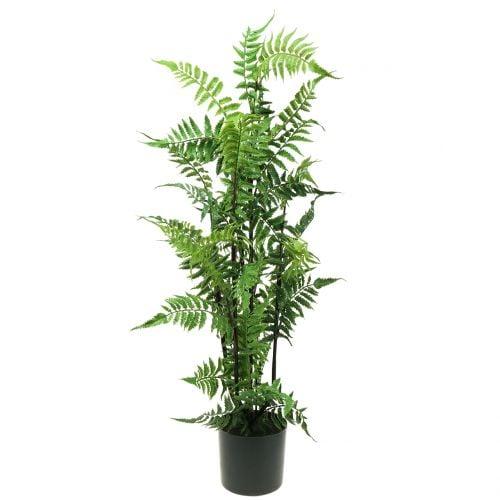 Baumfarn im Topf Grün 80cm