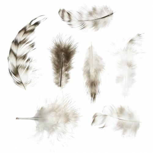 Federn Natur 5,5 - 10cm 10g