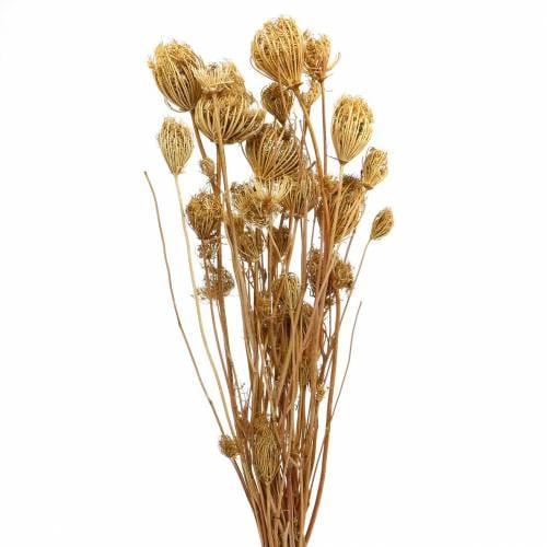 Trockenblumen Fenchel Natur 100g