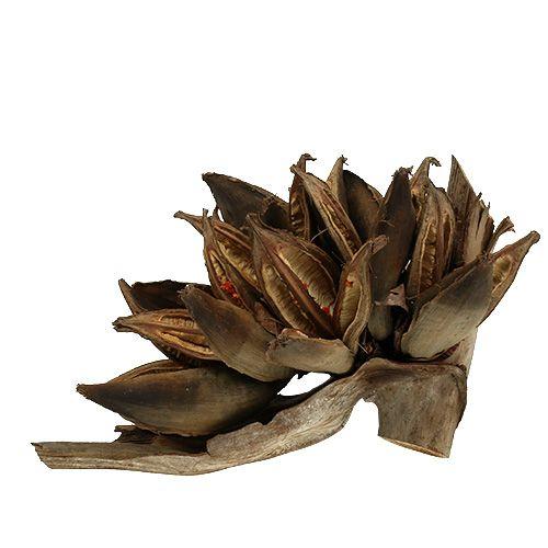 Holzdeko Penca Sororoca Natur 1St