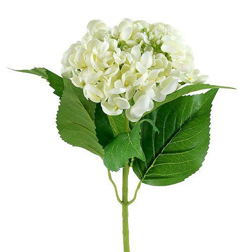 Hortensie 60cm Weiß
