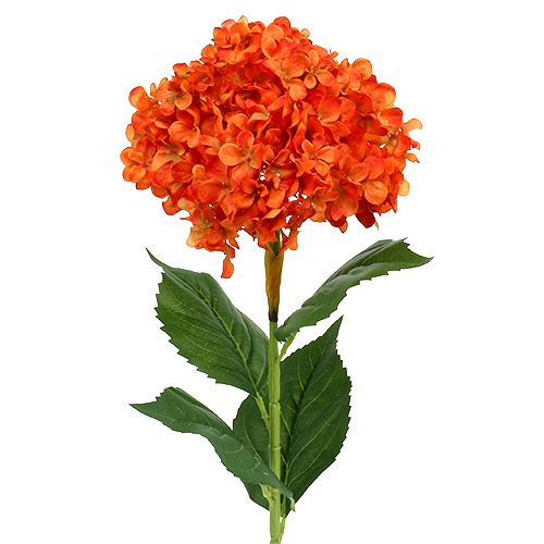 Hortensie orange