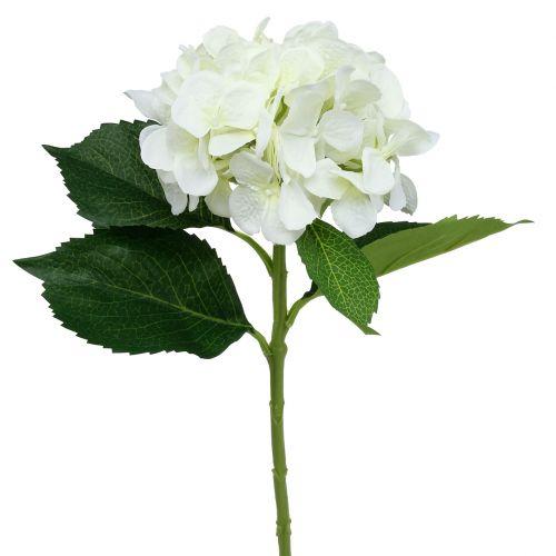 Hortensie Weiß L54cm 1St