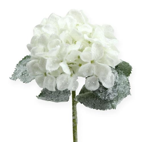 hortensie wei mit schnee effekt 25cm preiswert online kaufen. Black Bedroom Furniture Sets. Home Design Ideas