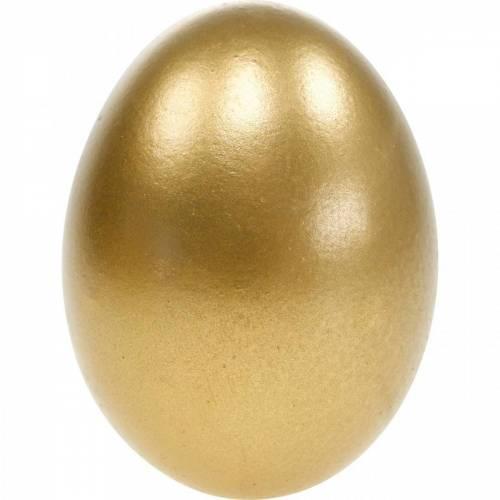 Hühnereier Ausgeblasene Eier Osterdeko Verschiedene Farben 10St