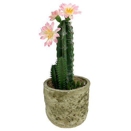 Kaktus im Topf mit Blüte Rosa H 21cm
