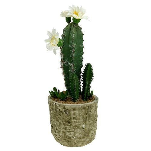 Kaktus im Topf mit Blüte 21cm Weiß
